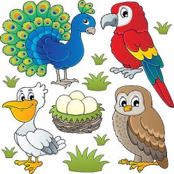 Stickers kit enfant planche de stickers Oiseaux réf 3695