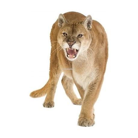 Sticker Puma Puma