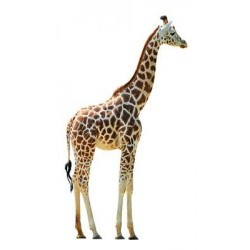 Sticker animal Girafe 72x130cm